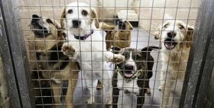 Beşiktaş Belediyesi evcil hayvan ticaretini resmen yasakladı