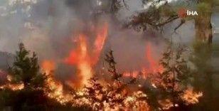 Lübnan'da orman yangını: 14 yaralı