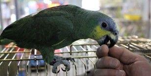20 kelime söyleyen papağan ilgi görüyor