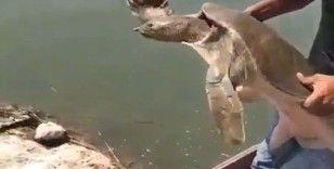Çuvala dolanmış Nil kaplumbağası bulundu