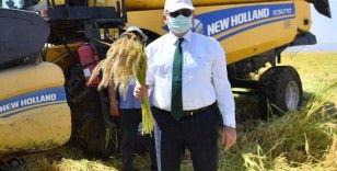 Vali Münir Karaloğlu Karacadağ pirincinin ilk hasadını gerçekleştirdi