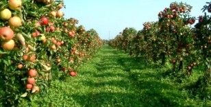 Isparta'da elma hasadı başladı