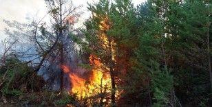 Ateşle oynayan genç çoban 30 hektar ormanlık alanı yaktı