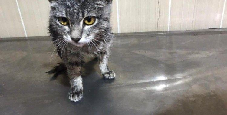 Hasta kedi tedavi edildi