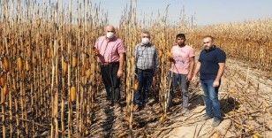 Karaman'da çıkan yangında kamyonetle 30 dekar mısır kül oldu