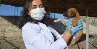 3 yılda bine yakın sokak köpeği sahiplendirildi