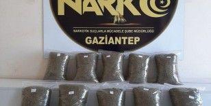 Gaziantep'te 10 kilo bonzai yakalandı