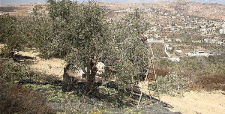 Yahudi yerleşimciler zeytin toplayan Filistinlilere saldırdı: 2 yaralı