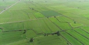 Türkiye tarım ve ormancılığın 10 yılını masaya yatırıyor
