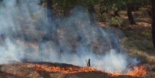 Sinop'ta çamlık alanda korkutan yangın