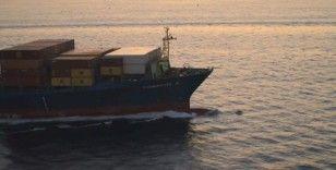 Yunusların dev gemilerle oyunu
