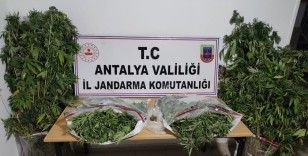 Jandarma bu yıl 563 uyuşturucu operasyonu yaptı
