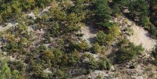 Keçilerine yedirmek için 34 meşe ağacını kesen çobana 12 bin lira ceza