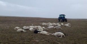 Üzerine yıldırım düşen sürüdeki 34 koyun telef oldu