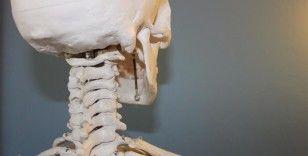 Bilim insanları, kafatasında yeni bir organ bulduklarını açıkladı