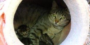 Anne kedi, dekoratif küpün içinde dördüz doğurdu