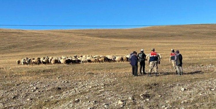 Damal'da kayıp hayvanlar drone ile bulundu