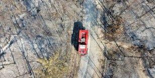Yangınlarda zarar gören orman alanı bu yıl 2019'u geçti