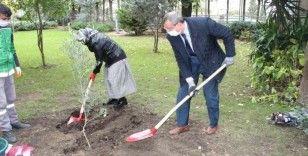 Rusya'nın İstanbul Başkonsolosluğu'nda zeytin ağacı dikme töreni