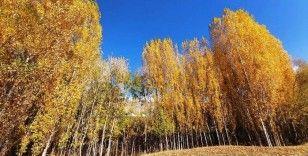 Bitlis'te sonbahar güzelliği göz kamaştırdı