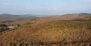 Avrupa'dan Türkiye'ye uzanan ormanlarda görsel şölen