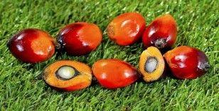 Nijerya palmiye yağına yıllık 500 milyon dolar ödüyor