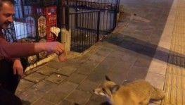 Şehre inen tilkiyi Sivas köftesi ile besledi