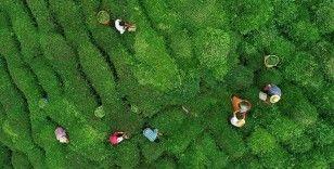 Yaş çay üreticilerine bu yılın ürünü için fark ödemesi yapılacak