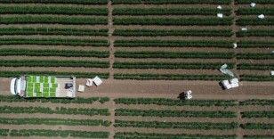 Çiftçiler 'model üretim'le daha fazla verim elde ediyor
