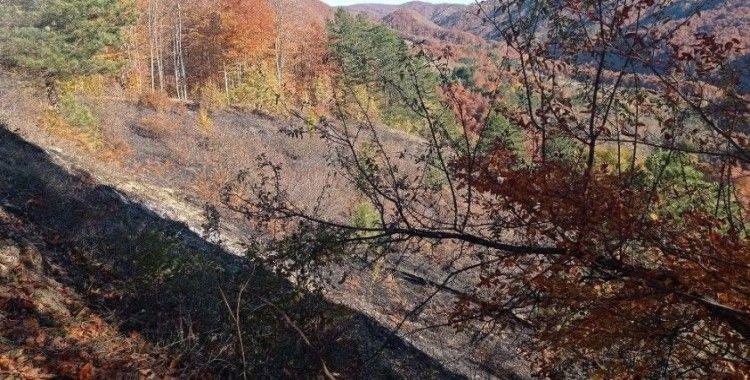 Düzce'de orman yangını kısa sürede söndürüldü