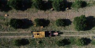 Antalya'nın yıllık tarımsal hasılası 17 milyar lira