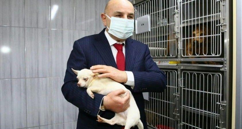 Ses telleri alındığı iddia edilen 68 cins köpeğe Keçiören Belediyesi sahip çıktı