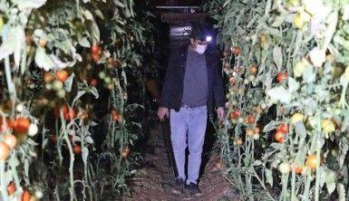 Antalya'da çiftçilerin film sahnelerini aratmayan domates hırsızları nöbeti