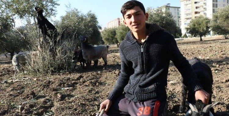 Sokağa çıkma kısıtlamalarında çobanlık yapıyor
