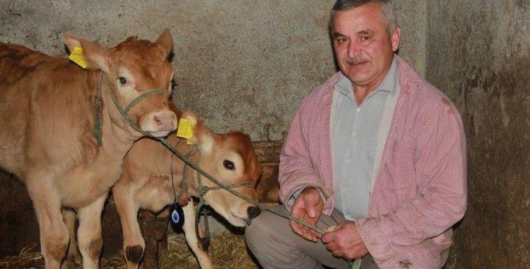 Yeni yılın ilk buzağılarına korona aşısını bulan Türk çiftin isimlerini verdi