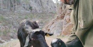 Antalya'da kayıp keçi ve yavrusu bulundu