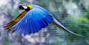 Antalya Hayvanat Bahçesinin renkli misafirleri: Papağanlar