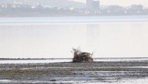 Büyükçekmece gölünde korkutan görüntü