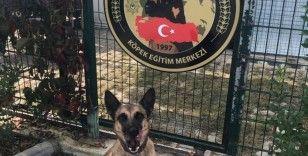 Yılın Narkotik köpeği Muğla'dan 'Hera'