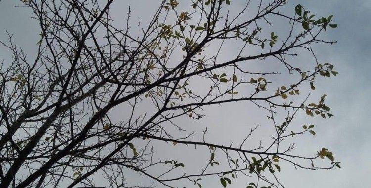 Sıcak havalar, ağaçları da şaşırttı