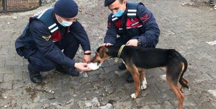 Bursa'da köpek tüfekle vuruldu