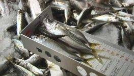 İstanbul'da balık tezgahlarında denetim yapıldı