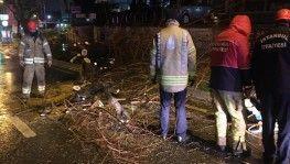 Bağdat Caddesi'nde şiddetli sağanak ve rüzgar nedeniyle ağaç devrildi