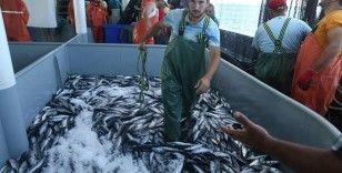 Hamsi avı yasağı 10 gün daha uzatıldı