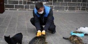 Büyükşehir, sokak hayvanları için mama bıraktı
