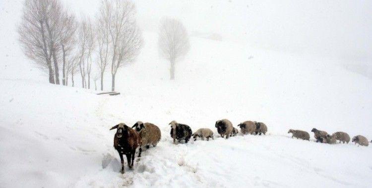 Muş'un köylerinde yaşayan besicilerin zorlu mesaisi