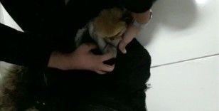 İlaçla uyuttuğu yavru köpekleri kabanının astarı içerisine gizleyerek getirmiş