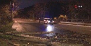Beykoz'da fırtınada çınar ağacı yola devrildi