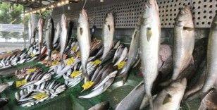 Marmara Denizi'nde Kofana Balığı bolluğu, kilosu 300 liradan 70 liraya düştü