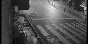 Sokak köpeklerinin 'kedi savaşı' vatandaşı isyan ettirdi
